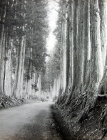 Avenue of Cryptomeria in Nikko